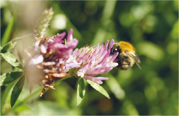 bee pollinating a purple flower